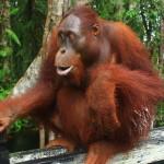 Enjoy Indonesia Tours Borneo