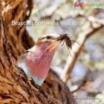 Enjoy Africa Tours Beautiful Botswana Vous Attends