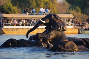 Enjoy Africa Tours Botswana Safari-Cruise