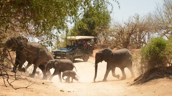 Enjoy Africa Tours Botswana 4x4 Safari