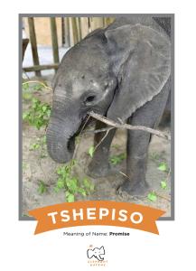 Tshepiso Promise