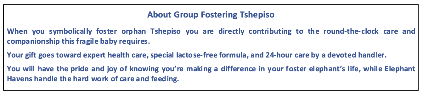 Enjoy Africa Tours About Tshepiso Group Fostering