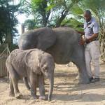 Enjoy Africa Tours EH 2 Babies
