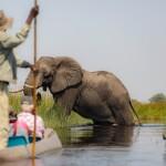 Enjoy Africa Tours Okavango Mokoro Elephant